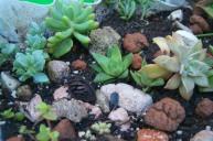 Plantas crasas: Poca agua, mucho sol